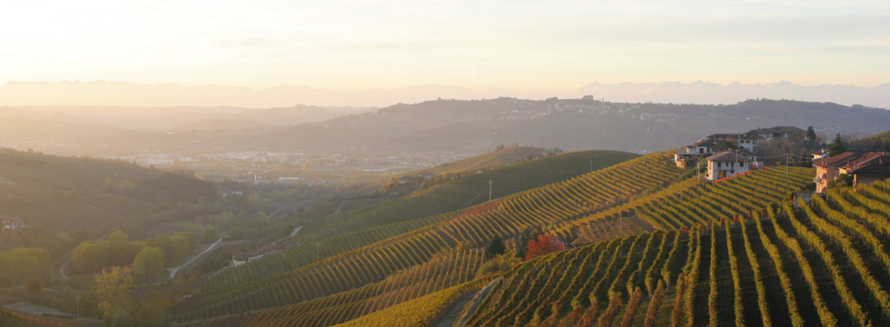Group Tours of the Langhe Region