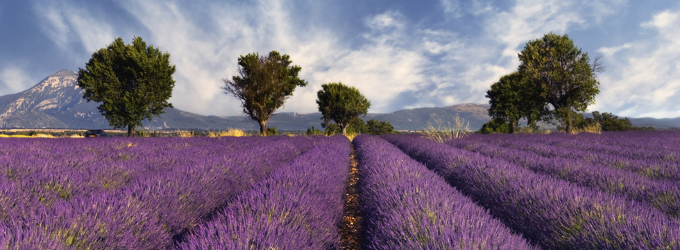 Group tour in Provence