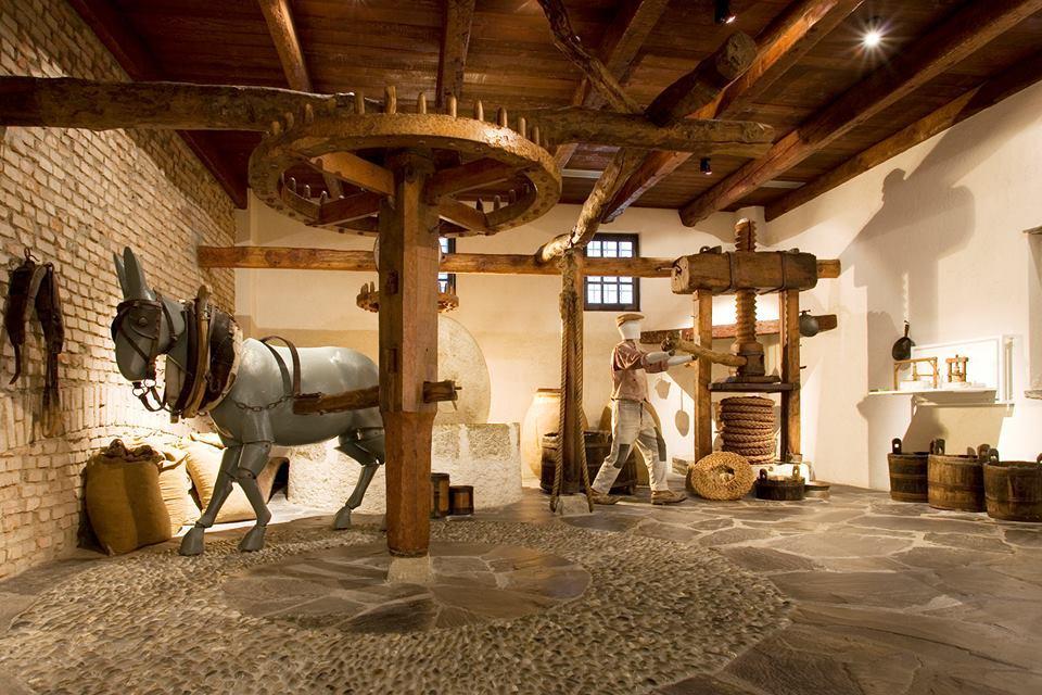 museo olivo riviera divina
